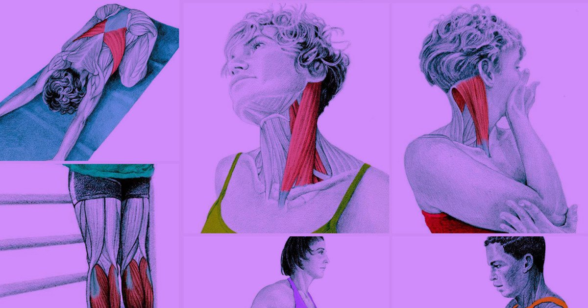 These Amazing Illustrations Show Exactly How To Stretch Every Muscle
