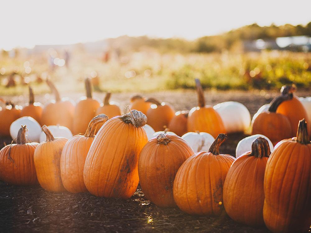 healthy-halloween-fun